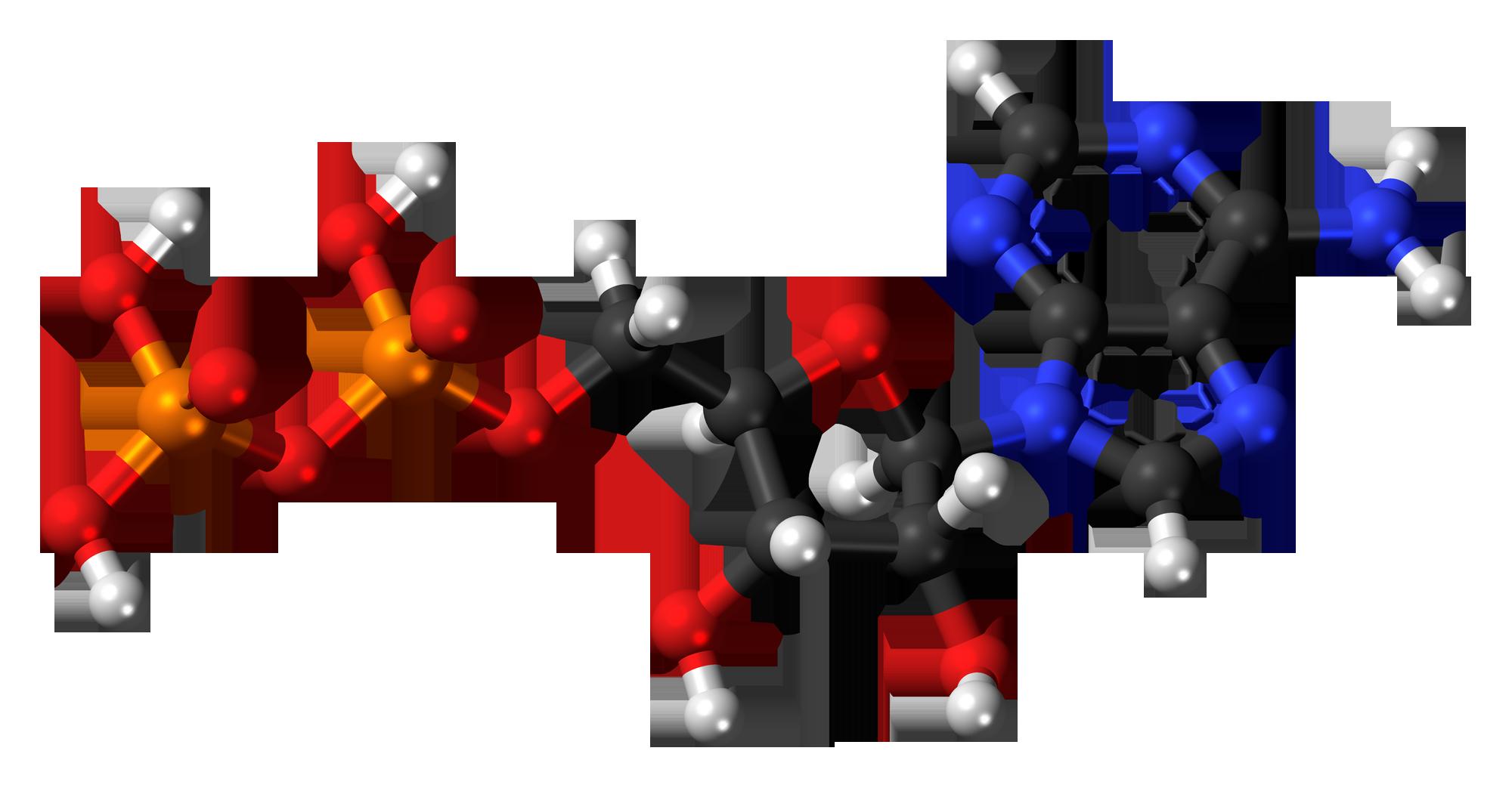 Ciclo ATP-ADP-chimicamo