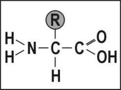 chimicamo