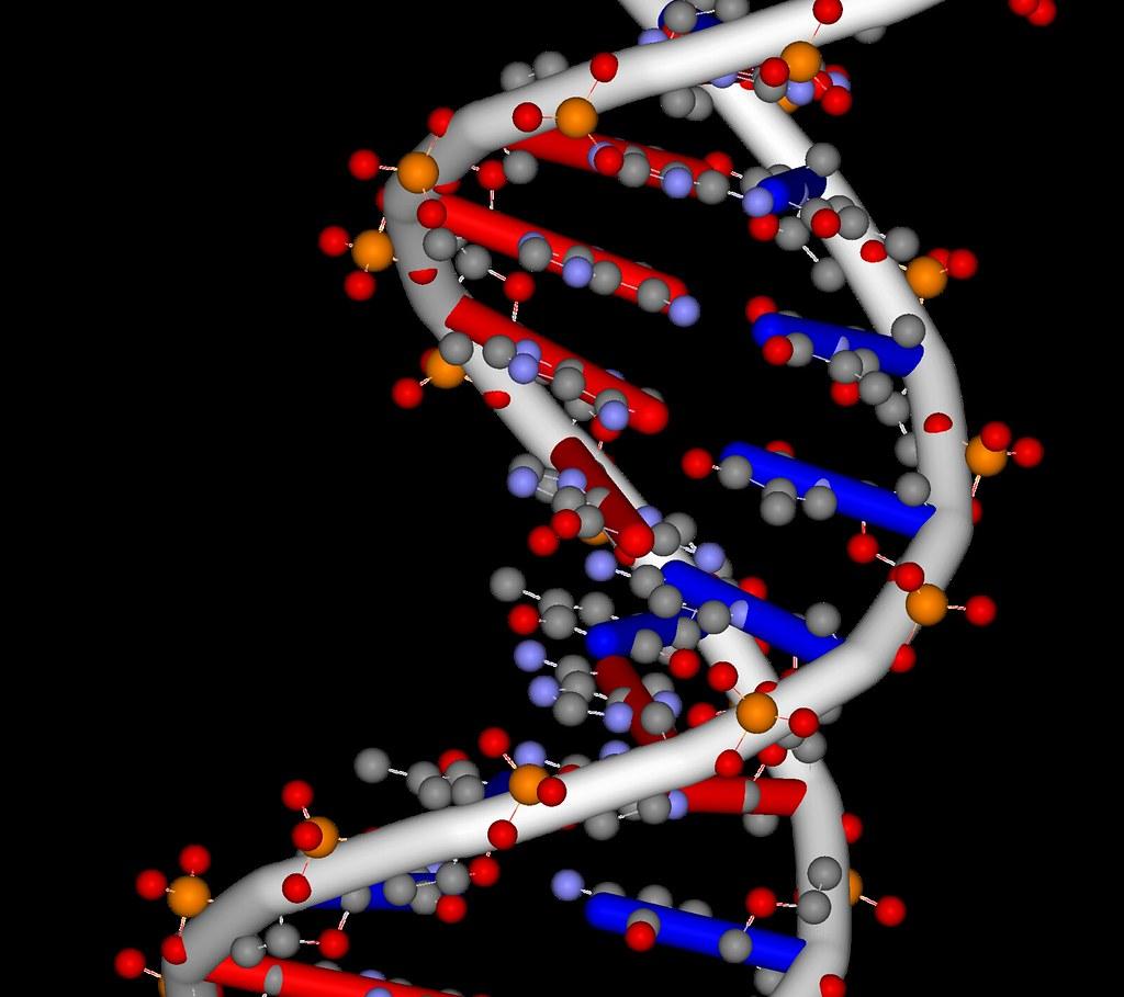 Composizione e struttura del DNA e dell'RNA - chimicamo