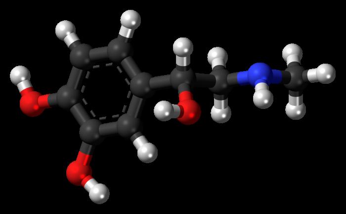 L'adrenalina: l'ormone che ci fa reagire-chimicamo