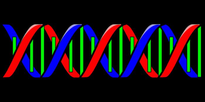 DNA-e-informazioni-genetiche-chimicamo