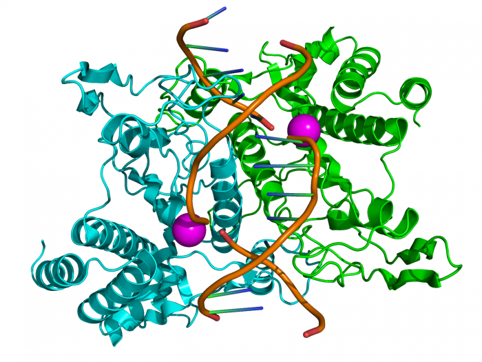 Gli enzimi-chimicamo