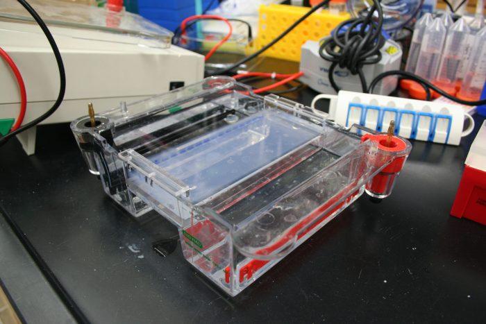 elettroforesi-chimicamo