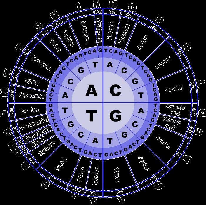 Determinazione degli amminoacidi in una proteina- chimicamo