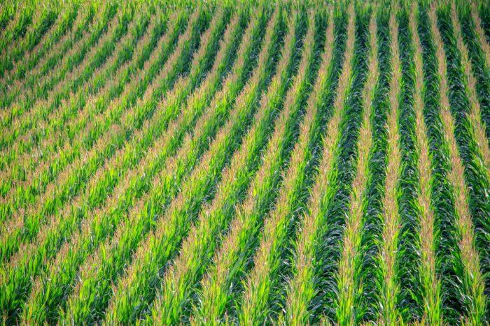 Biocarburanti-chimicamo