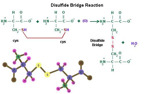 ponte disolfuro