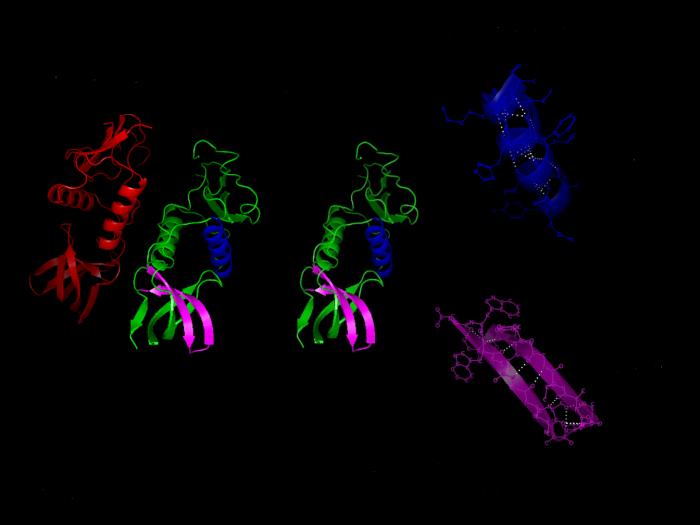 folding delle proteine-chimicamo