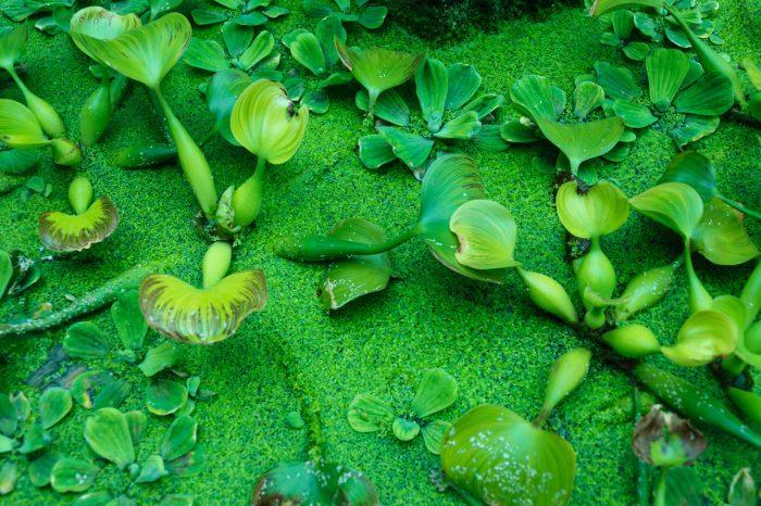 Nutrienti delle piante-chimicamo