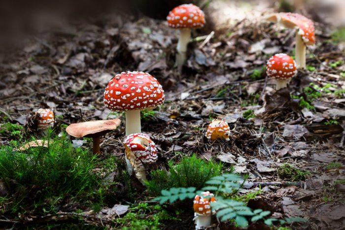Funghi velenosi-chimicamo