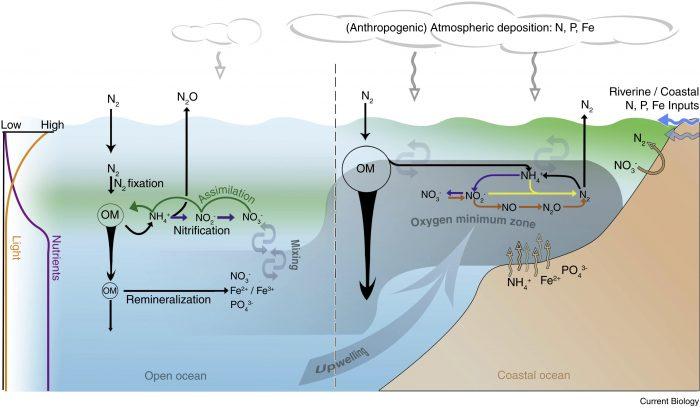 ciclo dell'azoto-chimicamo