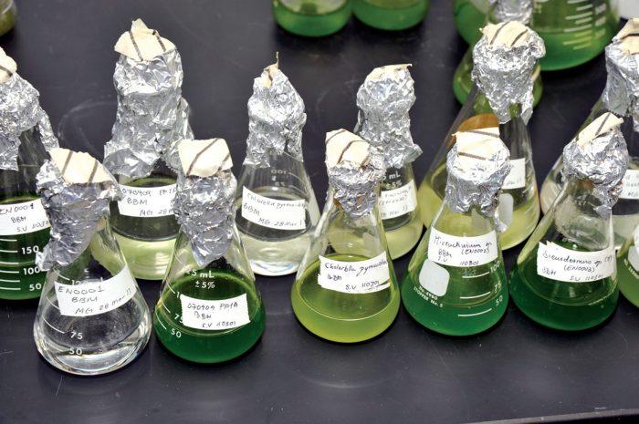 Gruppo 14 o gruppo del carbonio- chimicamo