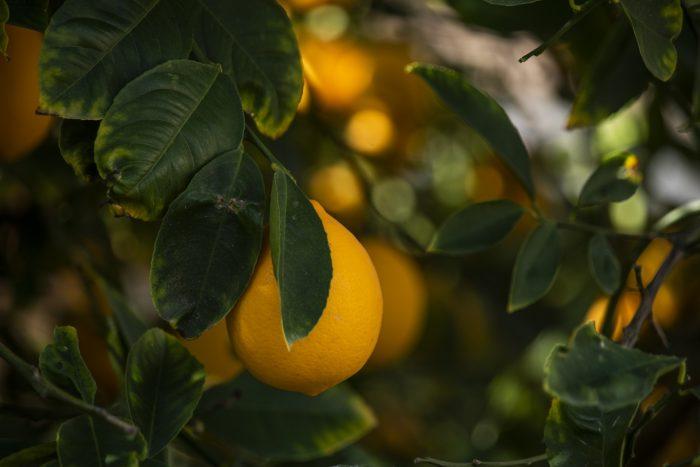 Limoni IGP- chimicamo