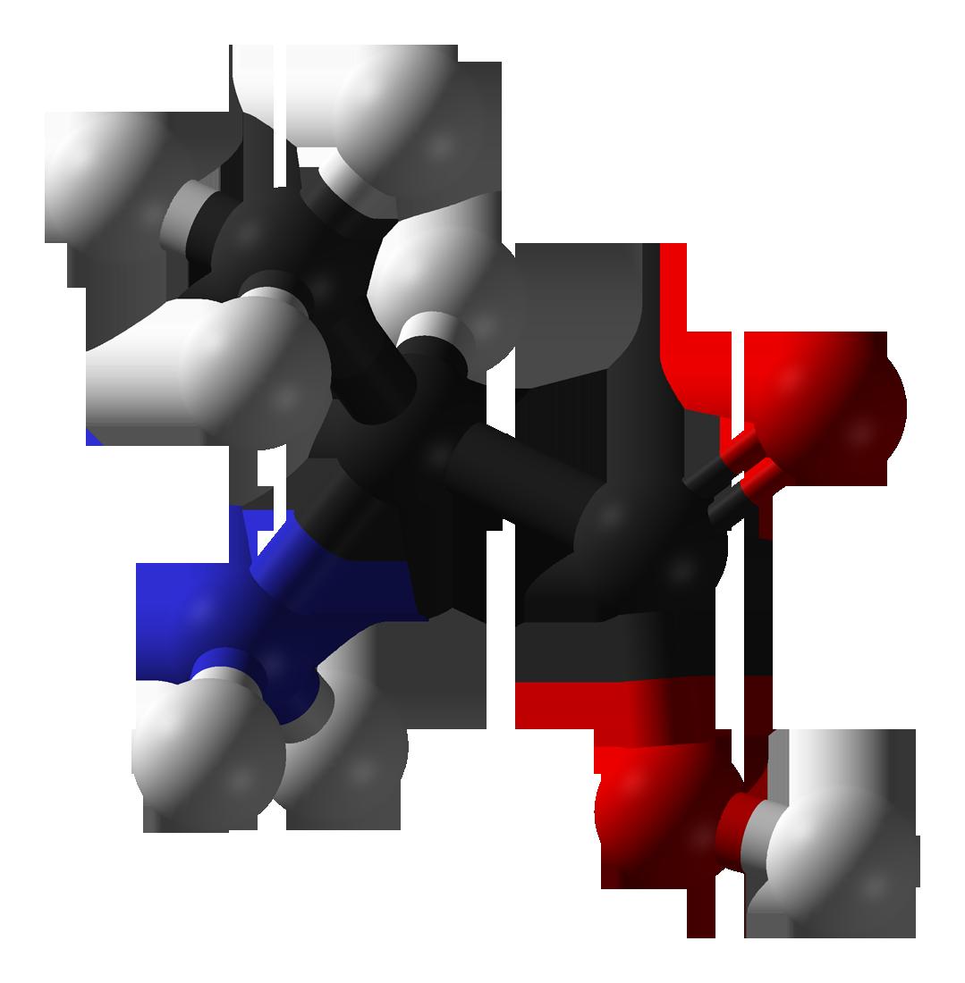 alanina- chimicamo