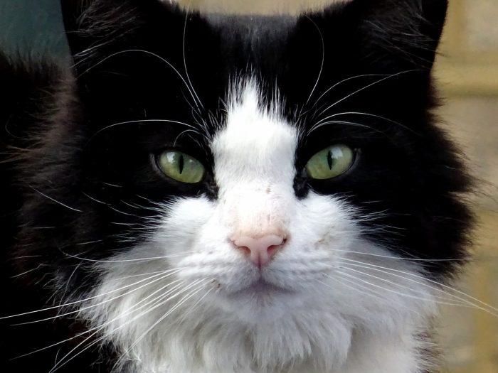 Cloruro di benzalconio- attenti al gatto- chimicamo