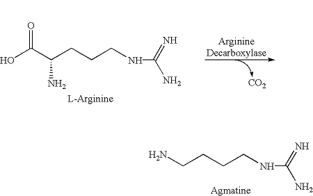 agmatina