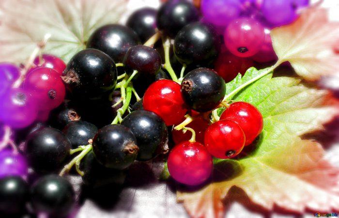 Antiossidanti- chimicamo