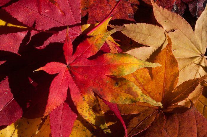 I colori dell'autunno- chimicamo.jpg