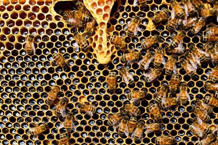 Miele, api e inquinamento- chimicamo