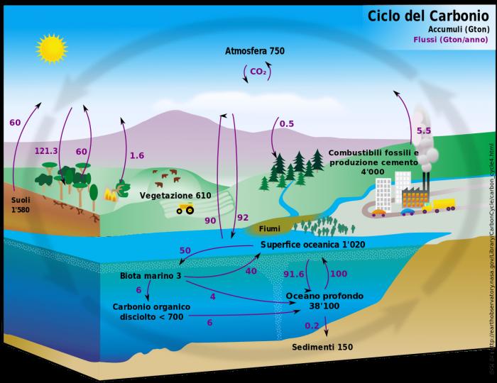 Ciclo del carbonio- chimicamo