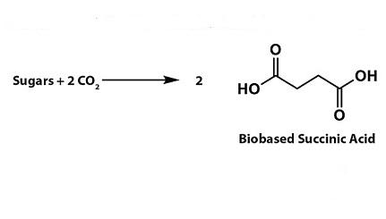 sintesi acido succinico da zuccheri