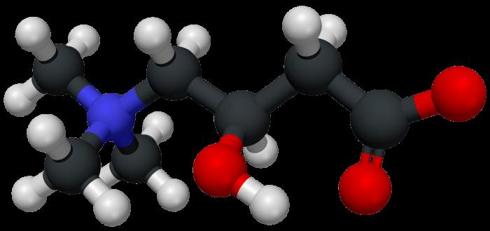 Carnitina- chimicamo