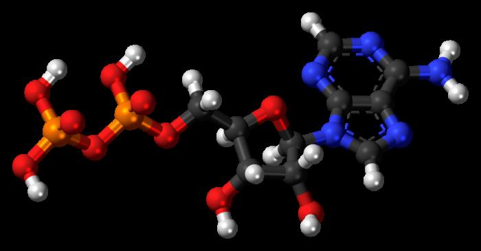 ATP ed energia cellulare- chimicamo