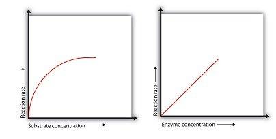 effetto della concentrazione