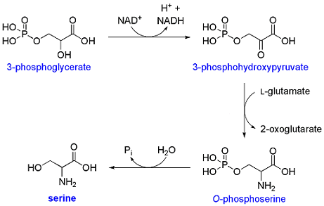 biosintesi serina