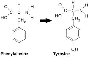 sintesi tirosina