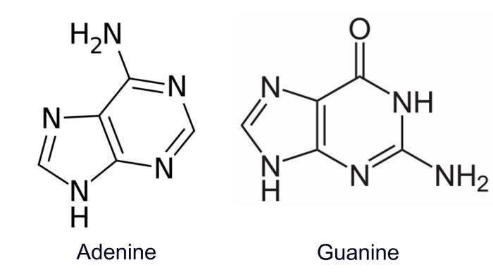 adenina e guanina