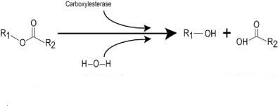 carbossilesterasi